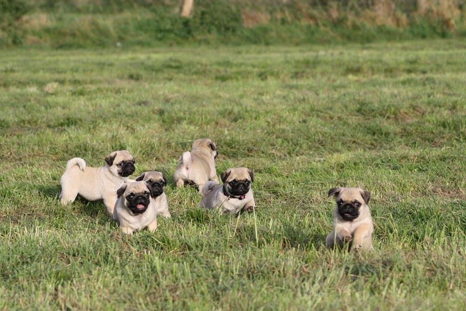 Limisengi's Puppies